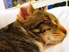 Kitten Love (the_gonz) Tags: canonpowershot sx730hs cat kitten family home life animal pet cute furry adorable awww tasha tash