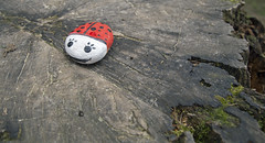 Object trouve. (jimj0will) Tags: trouve found beetle stone red