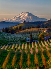 Mount. Adams (Eric Zumstein) Tags: hoodriver unitedstates us elitegalleryaoi bestcapturesaoi aoi