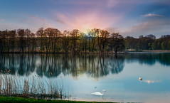 Landscape and lake. (augustynbatko) Tags: landscape nature lake water trees sky sun birds swan tree grass clouds spring