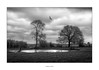 Guardians of the Watering Hole (AnthonyCNeill) Tags: landscape trees pond field buzzard birdofprey blackandwhite blancetnoir schwarz weiss nikon d7200 clouds outdoor reflection moody blanco negro