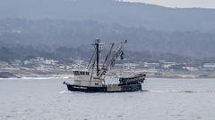 Fishing Boat (Stephen R. D. Thompson) Tags: 2018 california locations people stcphotography transportation stephen r d thompson boats usa monterey montereybay stephenrdthompson fishing openocean personfishing fishermanfishingequipment
