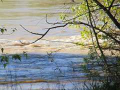 DSC06560 (Fotografías Gaby) Tags: rioebro ebro zaragoza crecida extraordinaria riada rio españa aragón