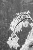 The Mountain (virtualwayfarer) Tags: zhangjiajieshi hunansheng china cn tianmenmountain tianmen mountain 天門山 tianmenmountainnationalpark zhangjiajie hunanprovince snow snowcovered icy ice freshsnow frozen winter cold coldnature nature travelphotography landscape landscapephotography rawnature dramaticnature mountains visit tourism travel traveldestination alexberger sony a7rii sonyalpha adventure adventurephotography wonderofhteworld chinese visitchina visithunan sky mountainside