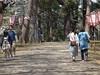 The approach (しまむー) Tags: sony cybershot dscf828 carl zeiss variosonnar t 7151mm 28200mm f228 sakura festa ashino park goshogawara aomori