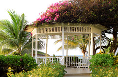 Gazebo By The Sea (Anthony Mark Images) Tags: caribbean ocean water jamaica montegobay mobay gazebo palmtree pretty beautiful lovely almondtree bougainvillea flowers blossoms sundaylights