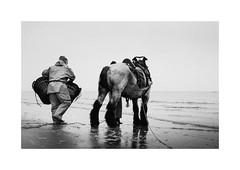 Garnaalvissers (gerritdevinck) Tags: garnaalvissers garnaalvissersoostduinkerke garnaalvissen oostduinkerke oostduinkerkebad koksijde koksijdeoostduinkerke fotografiekoksijde westkust westvlaanderen belgium belgie beach beautifullight beachlife belgiumcoast coast coastline gerritdevinckfotografie gerritdevinck sea seaview northsea beachphotography fujifilm fujifilmseries fujifilmxseries fujifilmbelgium fujifilmphotography fujifilmxpro2 xpro2 xf35mmf2 xf35mm fujinon35mmf2 zwartwit zwartwitfotografie blackandwhite blackandwhitephotography monochrome bw bwphotography bwtones