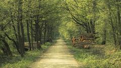 Spring Walk (Netsrak) Tags: wald waldweg frühling baum bäume april natur grün holz