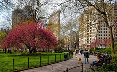Spring in NYC (WilliamND4) Tags: spring blooming tree park flatiron building grass people nyc newyorkcity nikon d750