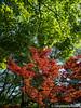 (takafumionodera) Tags: em1 leaf mishima olympus omd park rakujuen shizuoka tree 三島 公園 木 楽寿園 葉 静岡