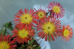 Flowers Design (Hive Bee) Tags: flower fiore fiori flowers garden giardino mygarden fujifilm fujinon fuji