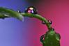 Meine kleine Welt - Explore 29.3.2018 (Uli He - Fotofee) Tags: ulrike ulrikehe uli ulihe ulrikehergert hergert nikon nikond90 fotofee makro moos garten nass regen regenwetter regentropfen eier ostern osterwetter feucht fröhlich bunt froheostern
