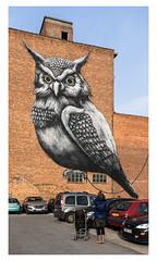ROA... (LukeDaDuke) Tags: roa owl mural muralart murals hasselt belgium belgique belgie belgien belgica belgië street streetart streetphotography streetlife urban urbanart urbanphotography urbanlife graffiti graffiticharacter graff
