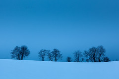 Blue Hour (Lars Øverbø) Tags: winter evening tree trees dusk blue bluehour gjerdrum norway norge frost cold minimalistic