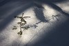 'Winter's Eulogy' No. 2 (Canadapt) Tags: winter snow top shadow forest keefer canadapt spruce