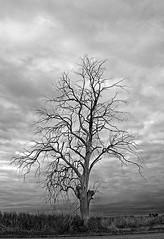 ... Abril 2018, 27 (hadamadrina) Tags: árbol solo soledad bnw blue blancoynegro photos