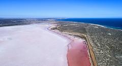 Pink Lake_Hutt Lagoon_WA_0427