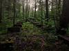 02.05.2018 seltsame Steine im Wald (FotoTrenz NRW) Tags: stones lost forest woods sumpf quadersteine lostplace stadtwald duisburg mauerreste trees wald moos