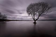 tree1 (Leighton Roberts) Tags: kenfigpool wales wfc welshflickrcymru water welsh araf tree