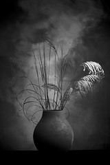 Busy Bouquet (Bert Pot) Tags: flower stilllife vase studio flowerpower nikon nikond800 d800 85mm stilflash bertpot bouquet busy bnw blackandwhite blackwhite monochrome