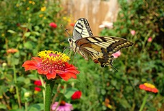butterfly (majka44) Tags: colors light meadow garden insect macro fly day tree green red