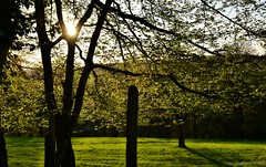~~ Petit clin d'oeil du soleil ~~ (Joélisa) Tags: avril2018 printemps spring soleil rayons rais arbres branches