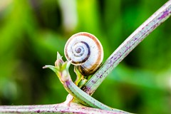 Snail - L'éscargot. (Bouhsina Photography) Tags: escargot canon ef100 bouhsina bouhsinaphotography printemps animal 7dii nature bokeh 2018