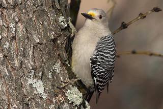 Wild Birds 21
