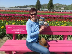 Mitzi Szereto with Teddy Tedaloo at Abbotsford Tulip Festival 2018 (Mitzi Szereto) Tags: abbotsford canada tulips tulipfestival britishcolumbia festivals nature flowers farms authors celebrities blooms floral gardens springtime teddytedaloo writers novelists scenic westerncanada pacificnorthwest mitziszereto