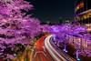 Midtown Blossom 2018 (GLIDEi7) Tags: α7riii a7riii a7r3 7rm3 α sony 1224mmf4556iidghsm 1224mm sigma japan tokyo minatoward roppongi midtown sakura cherryblossoms 日本 東京 港区 六本木 ミッドタウン 桜