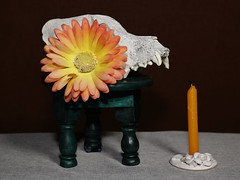 Still Life with Skull and Candle (N.the.Kudzu) Tags: tabletop stilllife skull small table candle flower primelens canondslr canoneflens