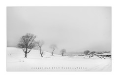 The Ardkeen Trees (RonnieLMills 5 Million Views. Thank You All :)) Tags: four trees ardkeen kircubbin county down northern ireland infrared converted nikon
