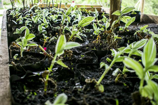 Propagación vegetal en Cerros Orientales