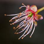 floraison thumbnail