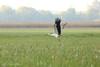 and off we go (photos4dreams) Tags: gersprenz münster hessen germany naturschutz nabu naturschutzgebiet photos4dreams p4d photos4dreamz nature river bach flus natur pur störche storch stork
