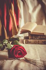 """Roses, llibres i petons"" / ""Roses, books and kiss"". Sant Jordi (nuriapase) Tags: santjordi bodegons vegetal rosa rose flower book catalonia catalunya tradition love amor inlove vintage george barcelona stilllife bodego"