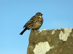 Ireland (Paul F 36) Tags: ireland bird