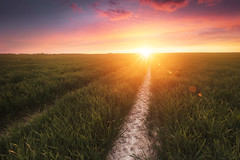 Spring sunset (jonathan le borgne) Tags: field sunset sun colors wheat blé champ soleil couleurs pink light ray day spring sky clouds