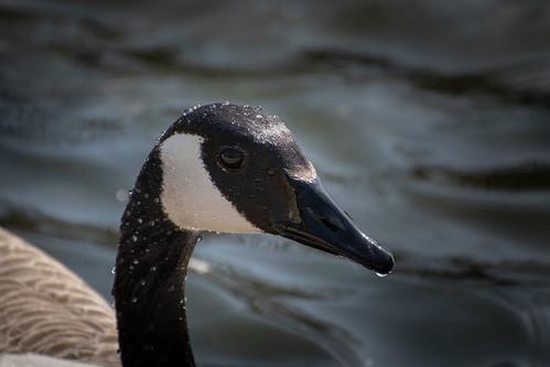 DuckPond20180429-DSC_1048.jpg
