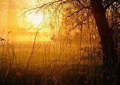 Behind the trees (Tobi_2008) Tags: sonnenaufgang sunrise bäume trees natur nature landschaft landscape sachsen saxony deutschland germany allemagne germania