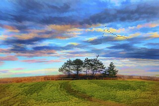 Trees, Sky, and Fields with Eagle