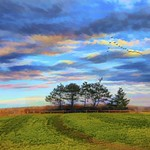 Trees, Sky, and Fields with Eagle thumbnail