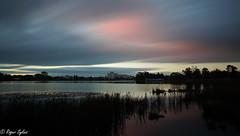 Lake rotoroa (hamilton lake) NZ sun rise (rogsykes) Tags: sonya77ii ndfilter sunrise lake rotoroa hamilton nz