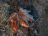 Cold_morning_frost (ЕгорЖуравлёв) Tags: frost leafs ground canon мороз иней листья