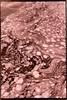 riverfoam (Isosceles Diego) Tags: lith