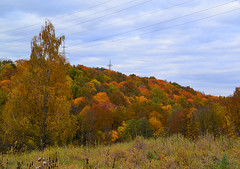 Crown mosaic (МирославСтаменов) Tags: russia moscowregion pushchino slope hill meadow forest broadleaved cloudscape autumn fall