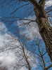 DSC00152 (johnjmurphyiii) Tags: 06416 clouds connecticut cromwell originalarw shelly sky sonyrx100m5 spring usa yard johnjmurphyiii