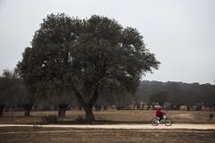 Bike. (Jose_Pérez) Tags: bike bici color bosque naturaleza pasear deporte sport mature tree arbol free libertad