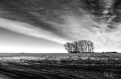 Paisaje (Paio S.) Tags: forest trees field country wb landscape paisaje negro blackwhite sky clouds grey canon
