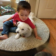 On the dog bed (earthdog) Tags: 2018 instagram googlepixel pixel androidapp moblog cameraphone dog pet animal liveanimal juanita poodlemix scooter house home